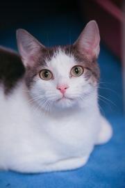 adoption photo