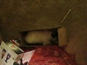 bandit's new sleeping spot