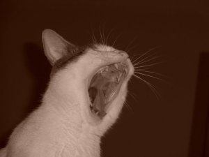 I am cat hear me roar!