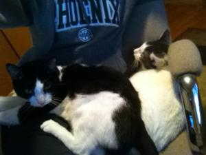two cats are better than one