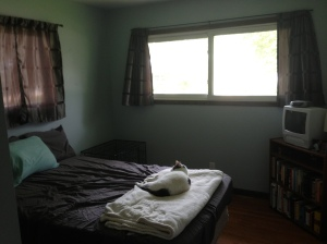spare room - new window trim